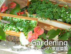 Gardening/ガーデニング・      家庭菜園を楽しむ